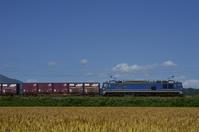 麦畑を横目に行く貨物列車 - レイルウェイの毎日