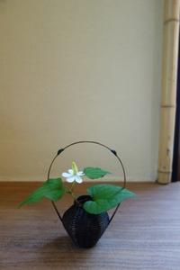 どくだみ - g's style day by day ー京都嵐山から、季節を楽しむ日々をお届けしますー