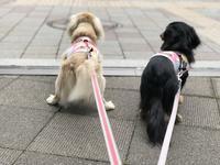 17年6月15日 同級生とランチ♪ - 旅行犬 さくら 桃子 あんず 日記