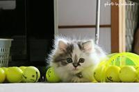 ゴルフボ-ルがチロのおもちゃに(^^♪ - 自然のキャンバス