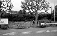 街路樹 - そぞろ歩きの記憶