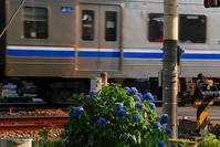 花と電車 - 信仙のブログ