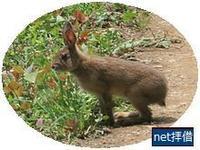 野ウサギが - 夏丸シルバーひとりごち