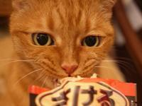 お誕生日猫 しぇる14歳編。 - ゆきねこ猫家族