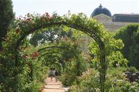 植物園のバラ - tony☆
