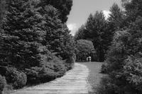 初夏の小径 - 気ままにお散歩