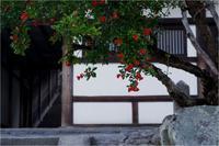 石榴(二月堂食堂) - duke days