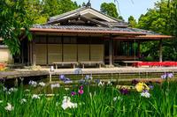 花菖蒲咲くしょうざん庭園 - 花景色-K.W.C. PhotoBlog