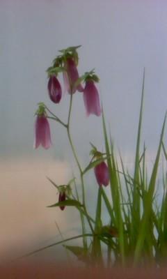 ピンクの花 - gallery 土の詩