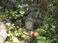 6月の斜面ガーデン - コロニヘーヴ