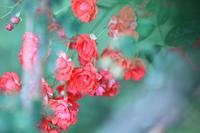 You like a flower - 写真の記憶