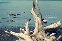 湖畔 - + anything goes +