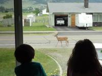 我が家の窓から - いなカナダ暮らし