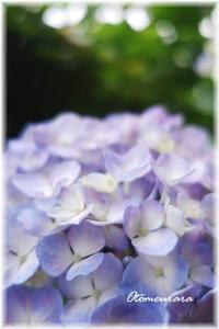 紫陽花のイメージ - 日々楽しく ♪mon bonheur