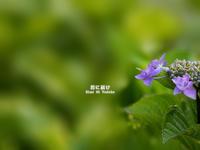 6月の宝石 VOL.06 - 君に届け