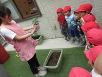 【鶴見園】夏野菜の栽培 - ルーチェ保育園ブログ  ● ルーチェのこと ●