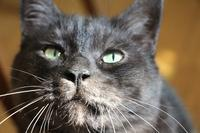 黒か灰色か - ぎんネコ☆はうす