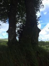 木からのメッセージとレタスの実験2 - イギリス ウェールズの自然なくらし