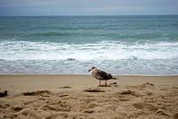 Santa Monica Pier : 埠頭を渡る風 - パサデナ日和