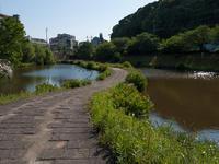 平尾(平尾大池公園) - 福岡彩々