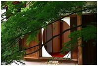 明月院後庭園で花菖蒲 -  one's  heart