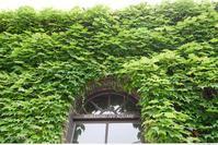 蔦の生い茂る風景 - aco* mode