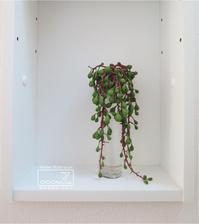 植物的生活813 - Atelier Botanique COCA-Z