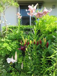 植物的生活814 - Atelier Botanique COCA-Z