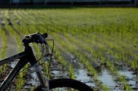 田植えがはじまりました - 空のむこうに ~自転車徒然 ほんのりと~
