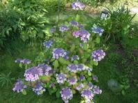 奈良東大寺。木漏れ日に輝く路端の紫陽花と奉納狂言。そして快慶! - のび丸亭の「奥様ごはんですよ」