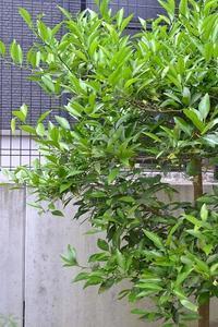 こぼれ種 - refresh-3
