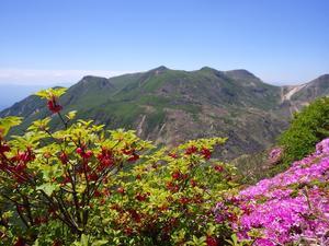 三俣山のミヤマキリシマ - 信ちゃんの美夜古たより
