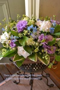 猫と羽虫 - 花色~あなたの好きなお花屋さんになりたい~