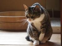猫さん、おはよ〜 - 3色猫だんご+1
