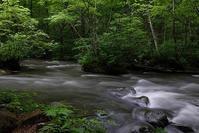 梅雨の溪を行く(追加) - へっぽこな・・