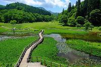 ニッコウキスゲ・花菖蒲(たきがしら湿原) - くろちゃんの写真