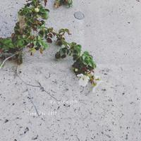 海浜植物 - ちょこってぃ