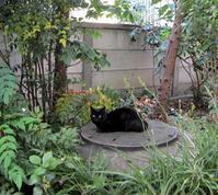 緑道の猫ちゃん - のんびり街さんぽ