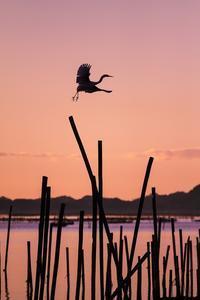 『National Geographic  Daily Dozen』 - 嫁と息子と日常のなにげない風景と・・・。