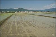 桜井市大西 麦畑は今・・・ - ぶらり記録(写真) 奈良・大阪・・・
