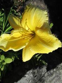 ビタミンカラーの黄色 - 日々の宝物