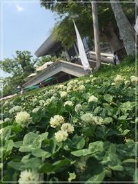 お気に入りのカフェはお山の上の「茂庵」と「進々堂」~6月の京都とレンタサイクル♪②~  - From sugar box studio