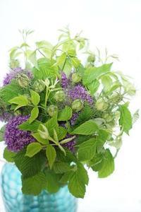ギガンジウム三様 - お花に囲まれて