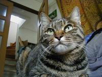 水無月と猫 - 猫+ねこ+ネコのつれづれ