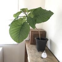 癒しの葉っぱ - sakurairo