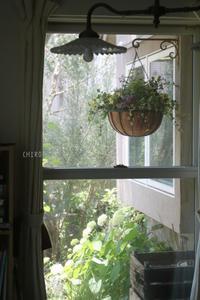 ダイニングの窓から - CHIROのお庭しごと