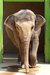橋を渡って動物に会いに - 動物園放浪記