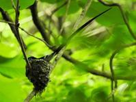 憧れの鳥との出会い - 花と写真と