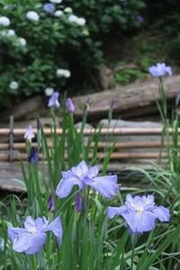 8年ぶりに山梨県・高川山に その7 - 季節(いま)を求めて