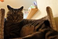急性咽頭炎の巻 - 「両手のない猫」チビタと愉快な仲間たち